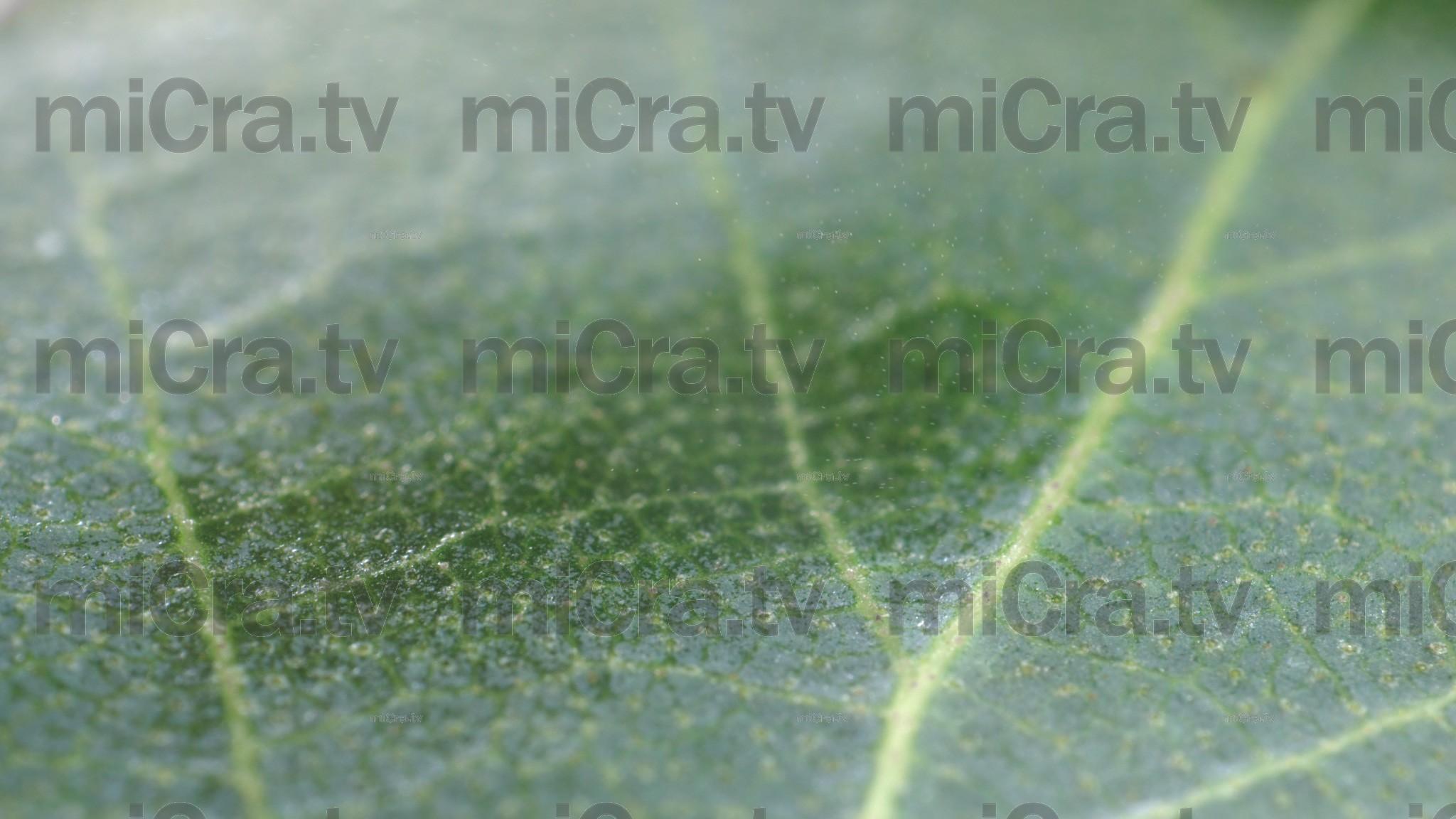 Freeze leaf 3